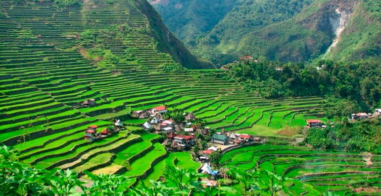 Arrozales en Filipinas