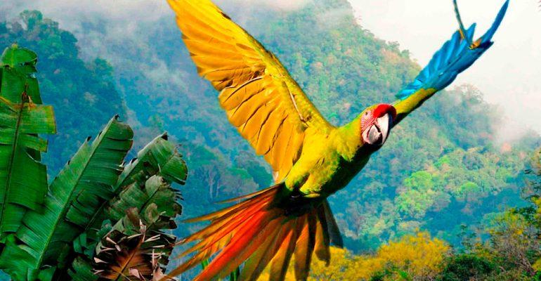 Costa Rica, tu viaje de novios